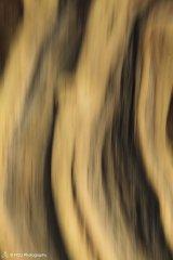 abstract35.jpg