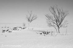 landscape_russia26.jpg