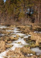 landscape_russia38.jpg