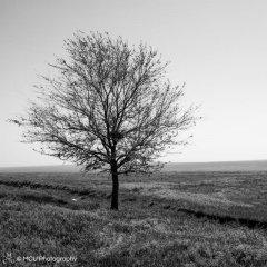 landscape_russia47.jpg