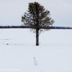 nature_russia12.jpg