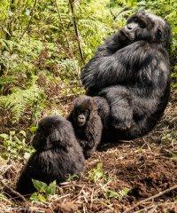 nature_rwanda11.jpg
