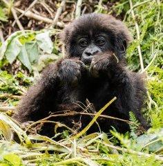 nature_rwanda12.jpg