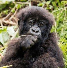 nature_rwanda14.jpg