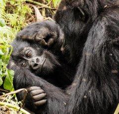 nature_rwanda16.jpg