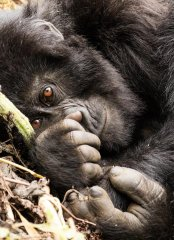 nature_rwanda18.jpg