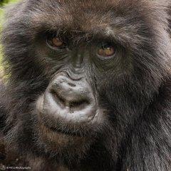 nature_rwanda21.jpg