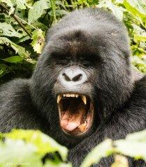 nature_rwanda26.jpg