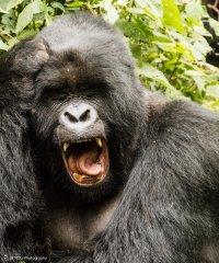nature_rwanda27.jpg