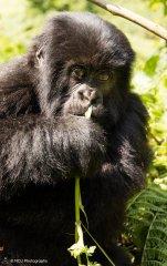 nature_rwanda3.jpg