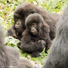 nature_rwanda31.jpg