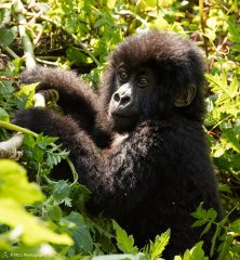 nature_rwanda4.jpg