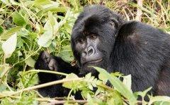 nature_rwanda6.jpg
