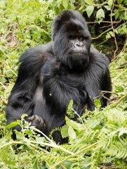 nature_rwanda7.jpg